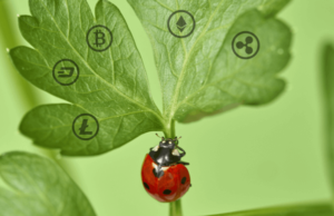 Lady Bug with Coins